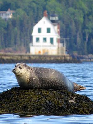 Seal at the breakwater